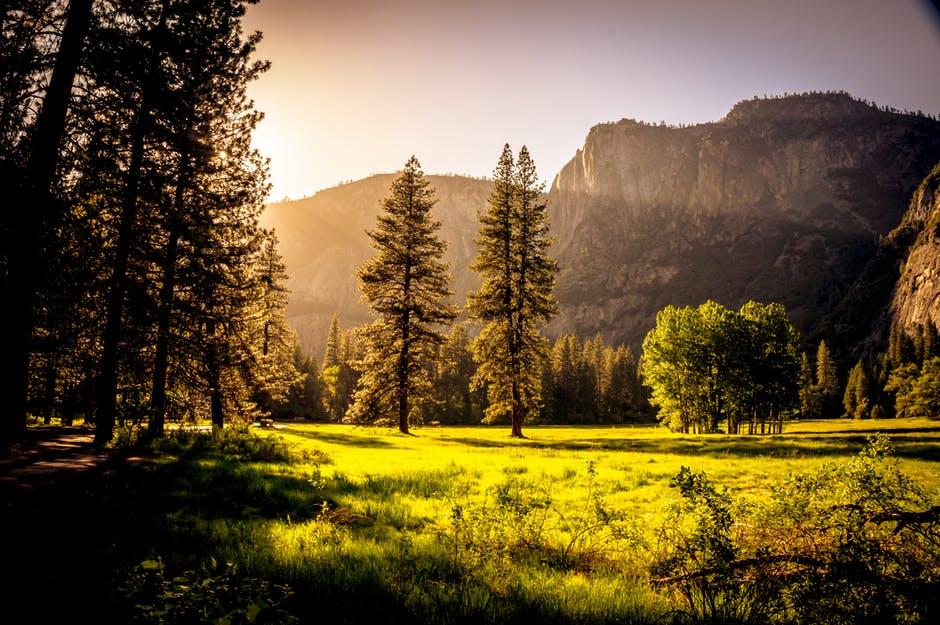 rising sun over a field