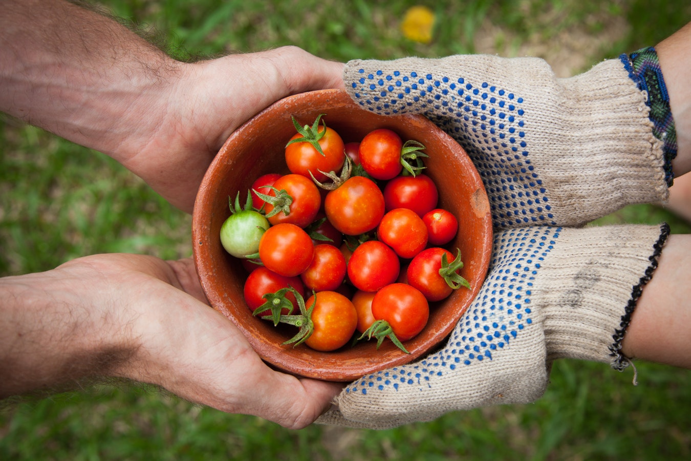 James Garden tomatoes